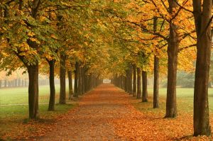 800px-Autumn_trees_in_Dresden