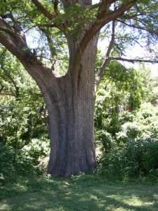 tree-trunk